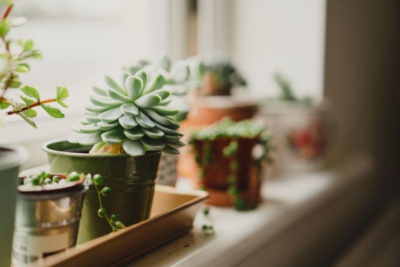 Paints, plants & prints